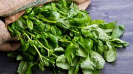 Fresh Basil Recipes | The Cabinet Store Twin Cities MN